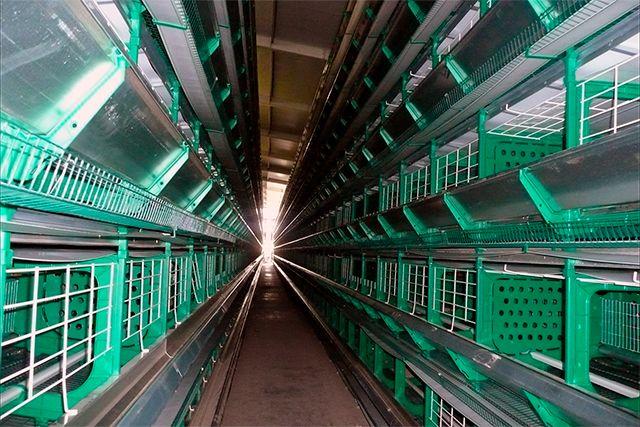 Instalación automática de puesta 300.000 huevos/día en Legaria (Navarra)